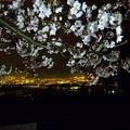 Photos: 桜と夜景