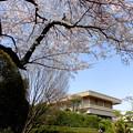 田園調布駅界隈(桜)_2015.03.30-03