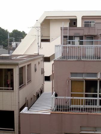 カラス(恋の行くへ)_2015.07.02.-14_終始stand-alone
