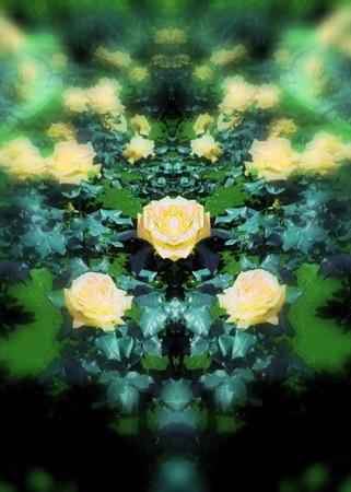 薔薇の言葉d-04