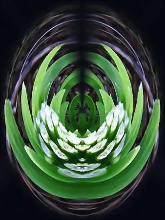 花のしずく_蕗の薹-01