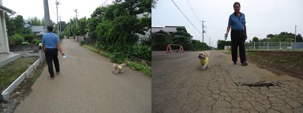 千葉パパとお散歩2