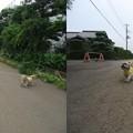 写真: 千葉パパとお散歩2