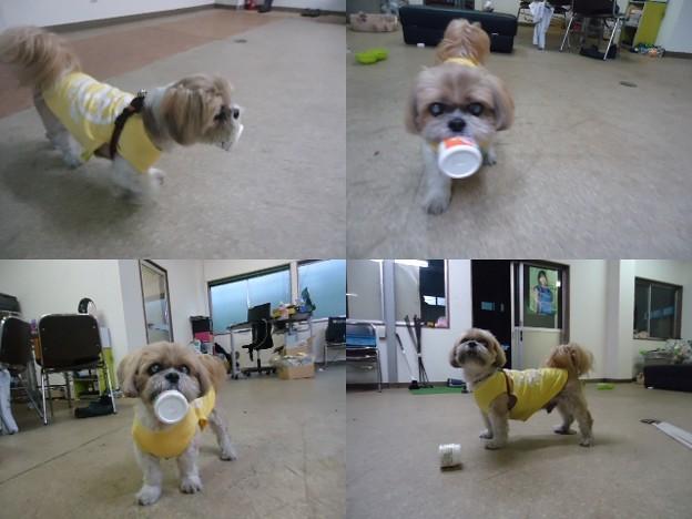 千葉事務所でクリーム壜で遊ぶ