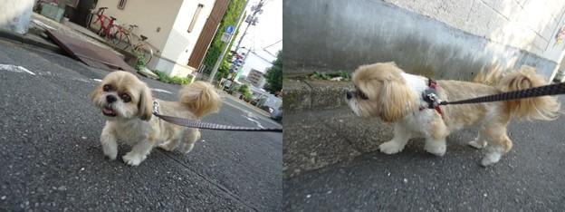 火曜日朝散歩2