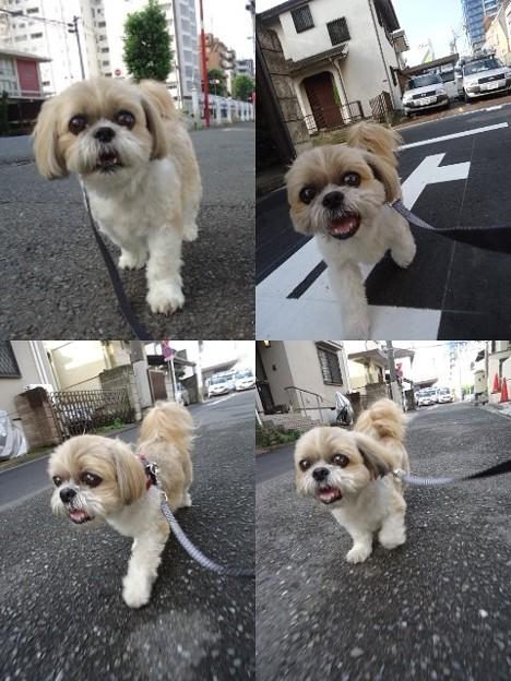 写真: お誕生日散歩