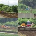 写真: 畑で働く人々