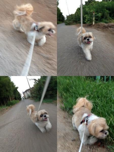 写真: お散歩