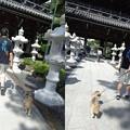 写真: 誕生寺とトラッチ