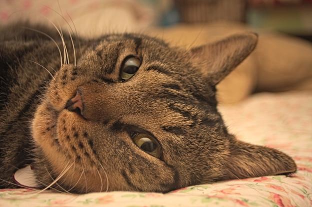 cat061