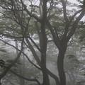 森のオブジェ