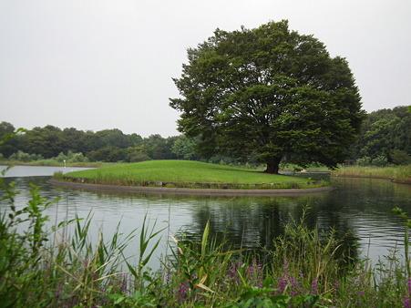 昭和記念公園 333