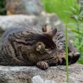Photos: ねこ岩