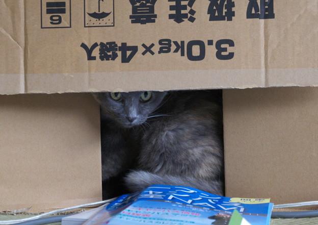 箱入りカナ【その2】