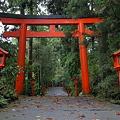 Photos: 箱根神社参道