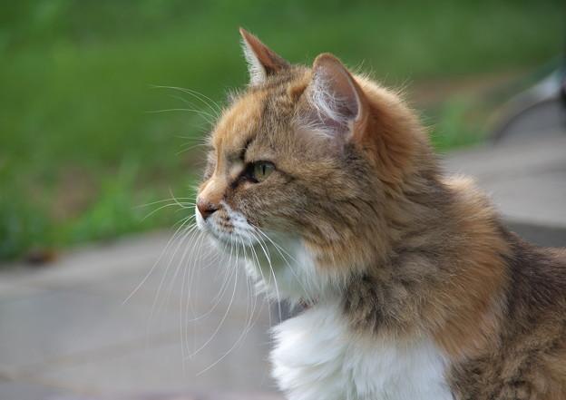元気な方の火星猫