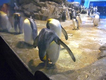 20110815 海響館 亜南極水槽01