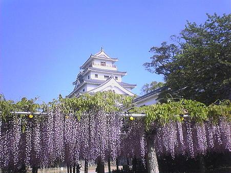 唐津城の藤