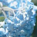 晴れ間に咲く青