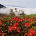 レンゲツツジと雲海
