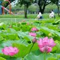 写真: 白鷺公園