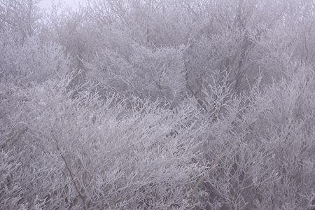 御在所の樹氷
