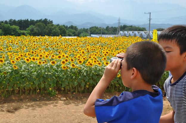 Photos: 明野のひまわり007