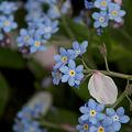 写真: 花びら 4