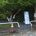 Photos: マイマイガ発生注意