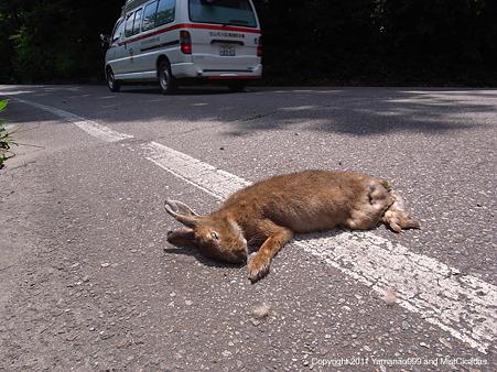 ニホンノウサギの画像 p1_7
