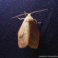 写真: yamanao999_insect2011_322