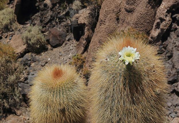 化石に咲く花