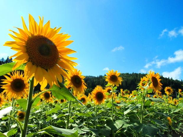 Photos: 夏の欠片