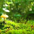 Photos: fairy‐tale world