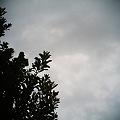 2011-10-25の空