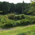 Photos: 大渕公園の調整池