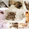 ネコの時間:佐藤 崇(satotaka)写真展のご案内
