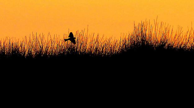 Photos: 朝陽の茂み