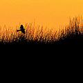 朝陽の茂み