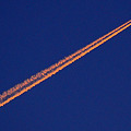 Photos: 朝焼けの飛行機雲