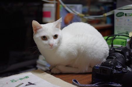 2015年06月30日のシロちゃん(2歳)