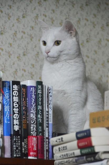 2015年08月28日のシロちゃん(メス2歳半)