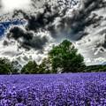 ラベンダーと怪しい夏の雲