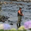 夏・紫陽花と釣り人