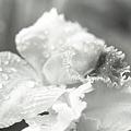 写真: 201202-01-005PZ