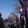 2012桜道(横浜市港南区)その3
