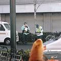 写真: 2012年03月03日_P3030002