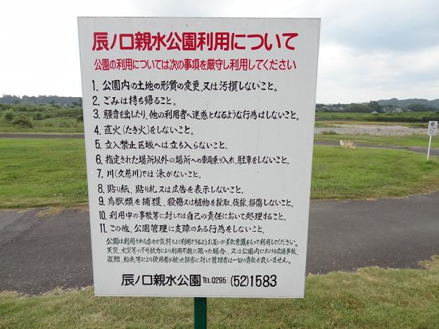 20150808_06 辰ノ口親水公園キャンプ?