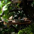 Photos: 餌場の雀