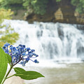 Photos: 紫陽花と雨と滝と